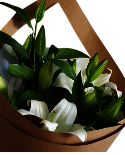 White Lilies - White Lillie Bouquet | White Flowers Auckland | White Flowers online |