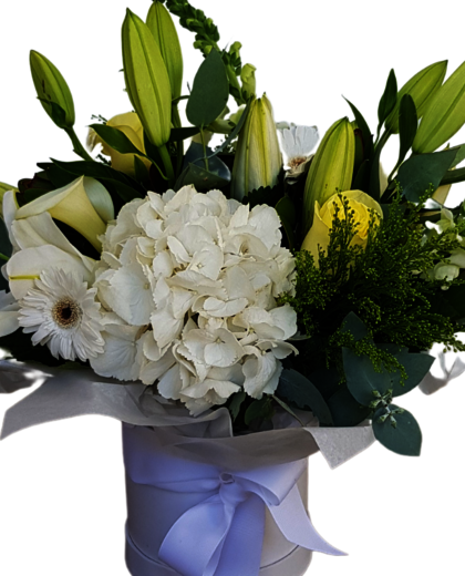 White Flowers in Hat Box - Auckland